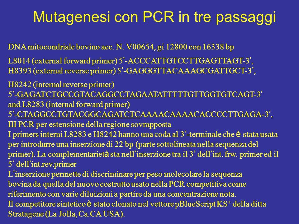 Mutagenesi con PCR in tre passaggi DNA mitocondriale bovino acc.