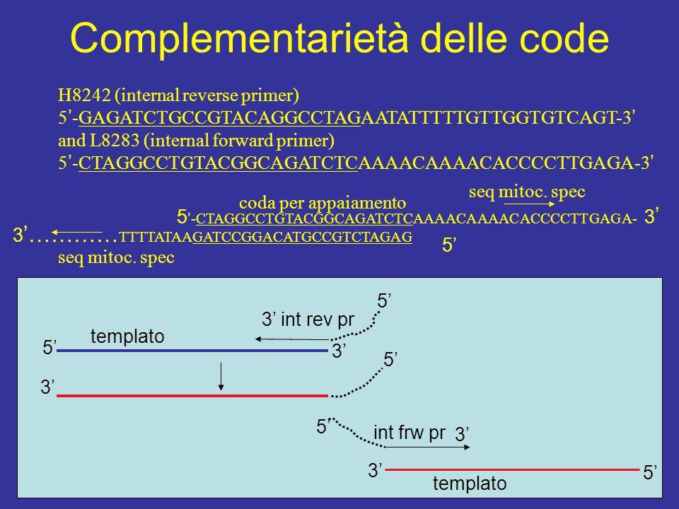 Complementarietà delle code H8242 (internal reverse primer) 5 ' -GAGATCTGCCGTACAGGCCTAGAATATTTTTGTTGGTGTCAGT-3 ' and L8283 (internal forward primer) 5 ' -CTAGGCCTGTACGGCAGATCTCAAAACAAAACACCCCTTGAGA-3 ' 3 '………… TTTTATAAGATCCGGACATGCCGTCTAGAG seq mitoc.