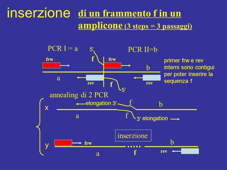 di un frammento f in un amplicone (3 steps = 3 passaggi) inserzione frw rev a f f b inserzione frw rev a f b f f annealing di 2 PCR a b PCR I = a PCR II=b x y 5' 3' elongation primer frw e rev interni sono contigui per poter inserire la sequenza f