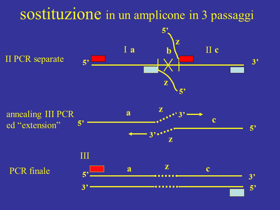 in un amplicone in 3 passaggi z 3' aI c b z z 5' II III annealing III PCR ed extension II PCR separate z a c 3' 5' ac z 3' 5' 3' 5' PCR finale sostituzione 5'