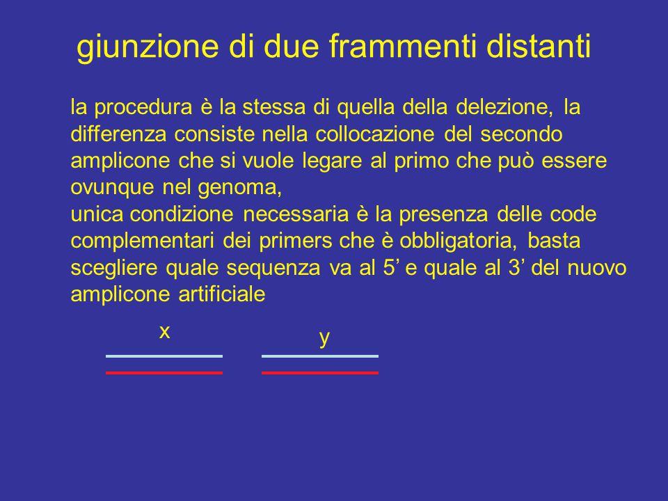giunzione di due frammenti distanti la procedura è la stessa di quella della delezione, la differenza consiste nella collocazione del secondo amplicon