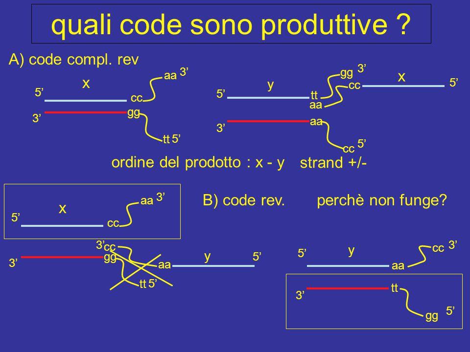 x y quali code sono produttive ? 3' 5' cc aa cc 5' 3' cc x tt gg aa gg tt y 5' aa cc 3' 5' gg 3' tt 5' x 3' 5' cc aa 5' 3' gg tt ordine del prodotto :