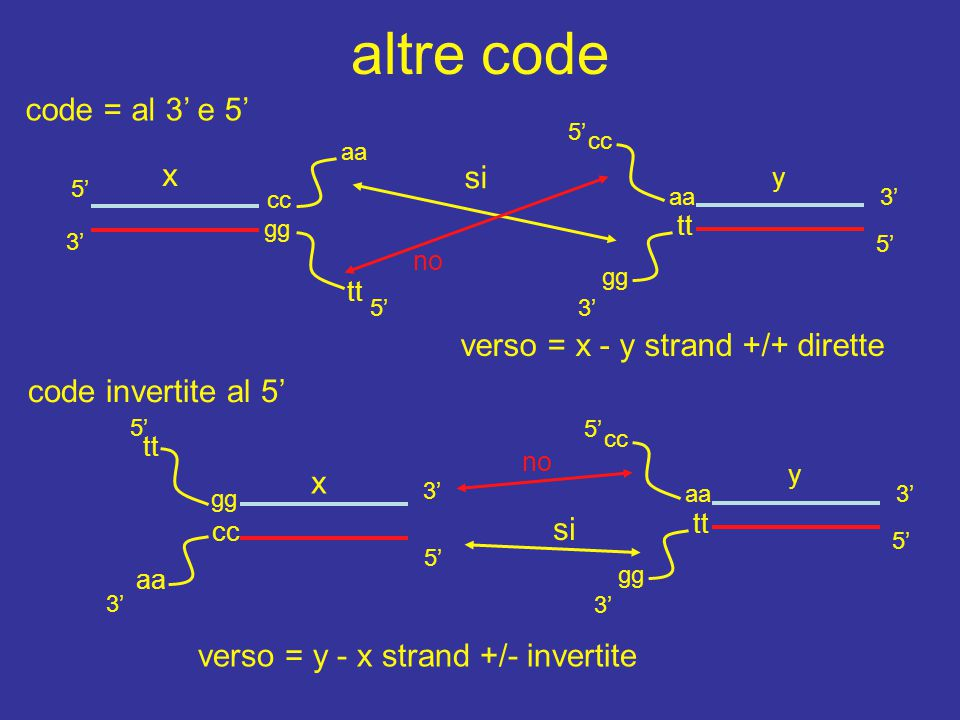 cc 5' 3' gg altre code 5' 3' aa 5' 3' gg tt x y si tt aa cc no 5' 3' 5' 3' gg tt y aa cc 5' 3' x verso = x - y strand +/+ dirette aa cc 5' 3' tt gg no