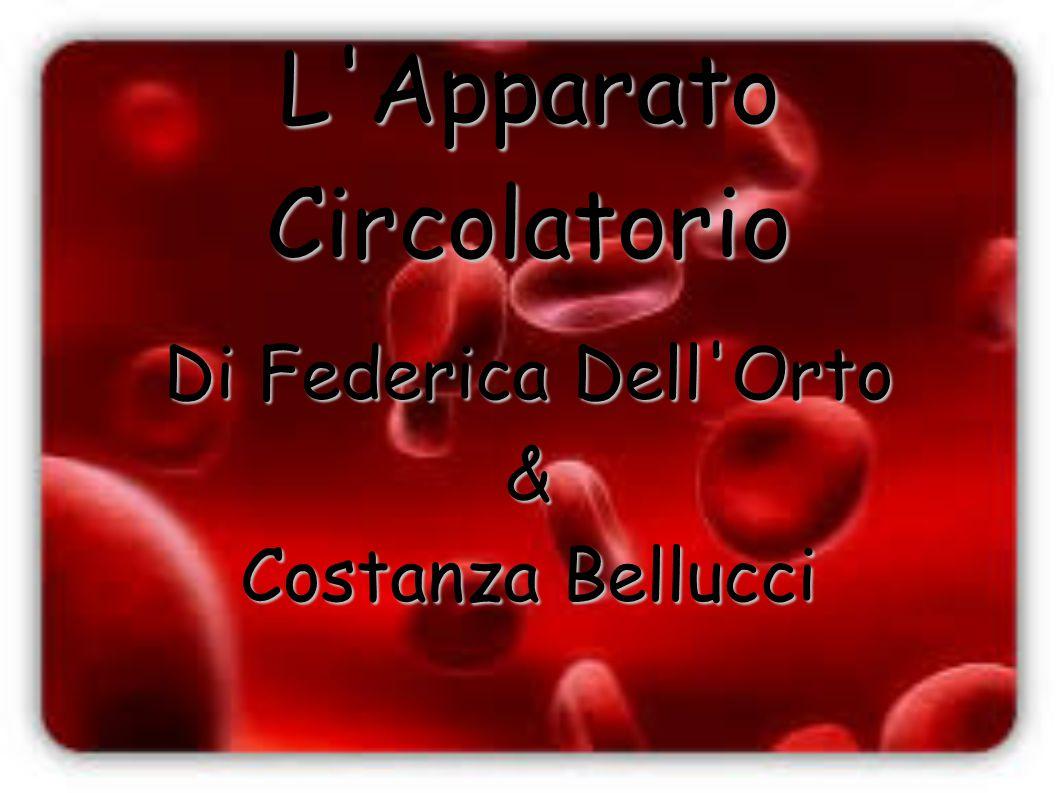 L'Apparato Circolatorio Di Federica Dell'Orto & Costanza Bellucci
