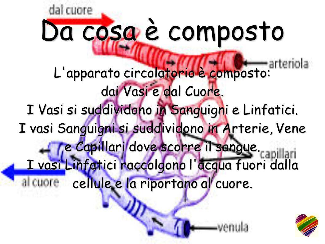Da cosa è composto L'apparato circolatorio è composto: dai Vasi e dal Cuore. I Vasi si suddividono in Sanguigni e Linfatici. I vasi Sanguigni si suddi