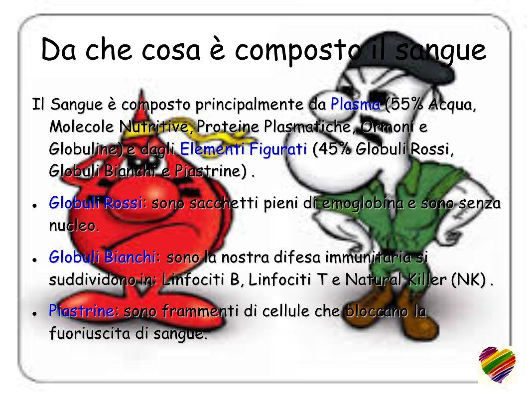 Da che cosa è composto il sangue Il Sangue è composto principalmente da Plasma (55% Acqua, Molecole Nutritive, Proteine Plasmatiche, Ormoni e Globuline) e dagli Elementi Figurati (45% Globuli Rossi, Globuli Bianchi e Piastrine).