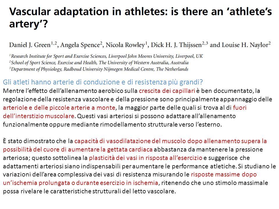 Gli atleti mostrano un aumento della capacità massima di vasodilatazione.