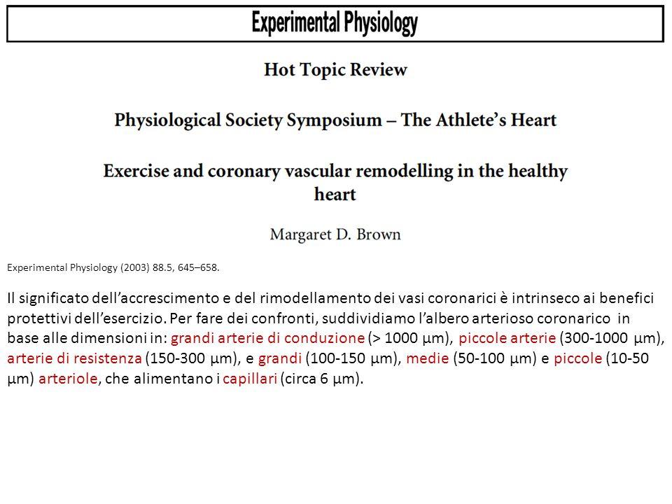 Experimental Physiology (2003) 88.5, 645–658. Il significato dell'accrescimento e del rimodellamento dei vasi coronarici è intrinseco ai benefici prot