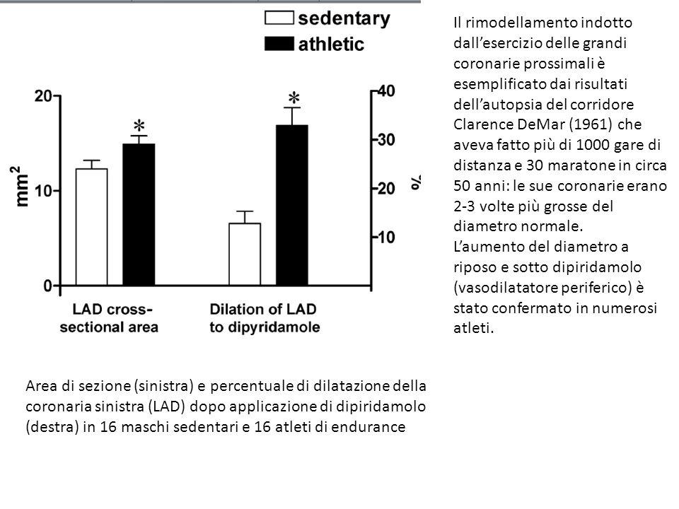 Il rimodellamento indotto dall'esercizio delle grandi coronarie prossimali è esemplificato dai risultati dell'autopsia del corridore Clarence DeMar (1