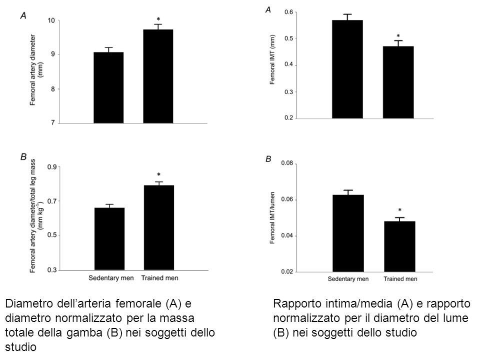 Diametro dell'arteria femorale (A) e diametro normalizzato per la massa totale della gamba (B) nei soggetti dello studio Rapporto intima/media (A) e r