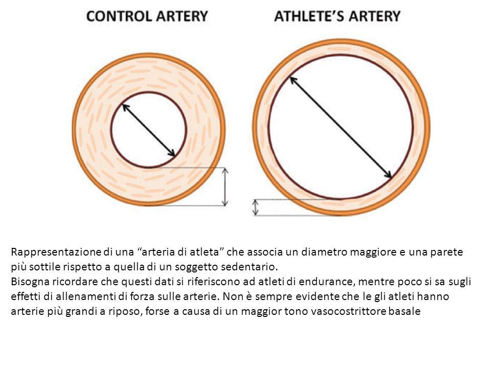 Variazioni del diametro (A) e dello spessore di parete (B) dell'arteria femorale per uno spettro completo di attività fisica, che va dall'atleta di endurance con diverse durate dell'allenamento a vari modelli di inattività fisica.