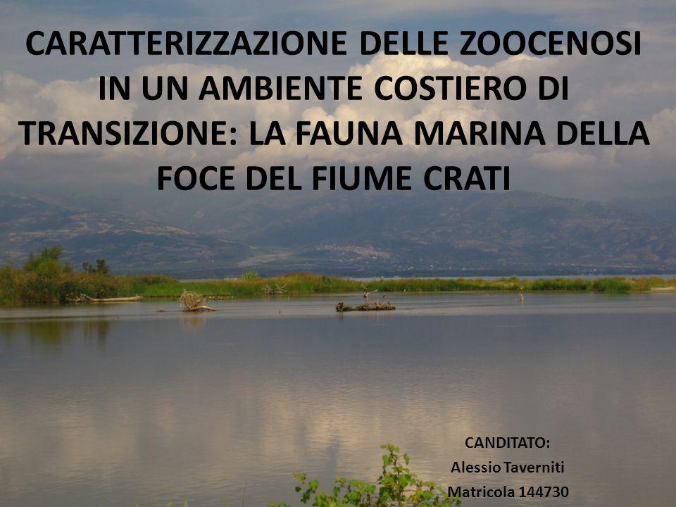 Scopo del lavoro Ecosistema costiero di transizione (ECT) Obiettivi della ricerca Zone di estuario