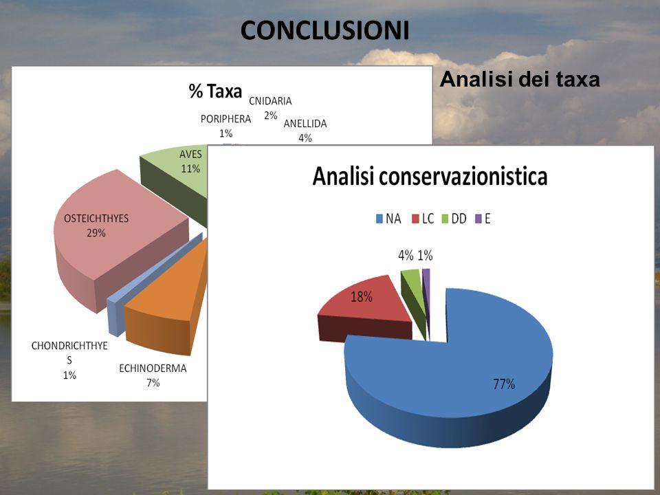 CONCLUSIONI Analisi dei taxa
