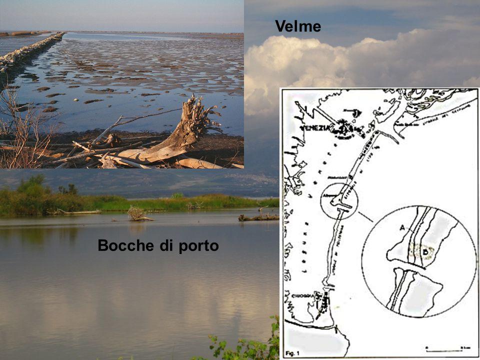 Analisi delle categorie ecologiche Analisi delle distribuzioni biogeografiche