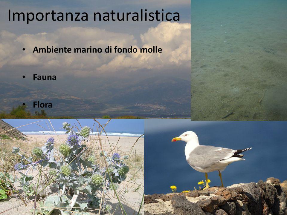 Importanza naturalistica Ambiente marino di fondo molle Fauna Flora