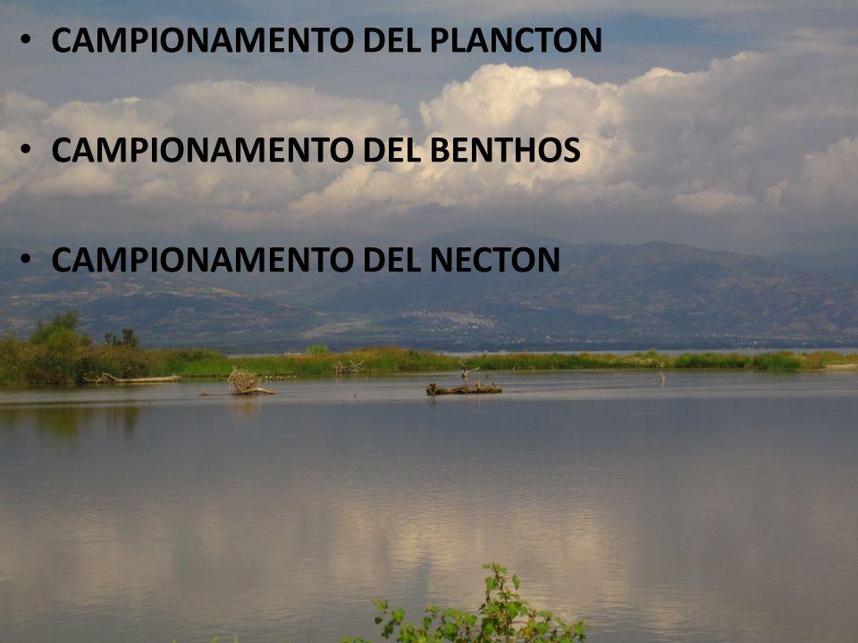CAMPIONAMENTO DEL PLANCTON CAMPIONAMENTO DEL BENTHOS CAMPIONAMENTO DEL NECTON