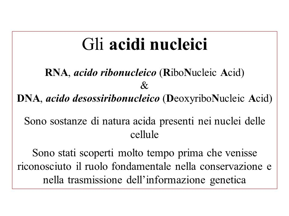 Gli acidi nucleici RNA, acido ribonucleico (RiboNucleic Acid) & DNA, acido desossiribonucleico (DeoxyriboNucleic Acid) Sono sostanze di natura acida presenti nei nuclei delle cellule Sono stati scoperti molto tempo prima che venisse riconosciuto il ruolo fondamentale nella conservazione e nella trasmissione dell'informazione genetica