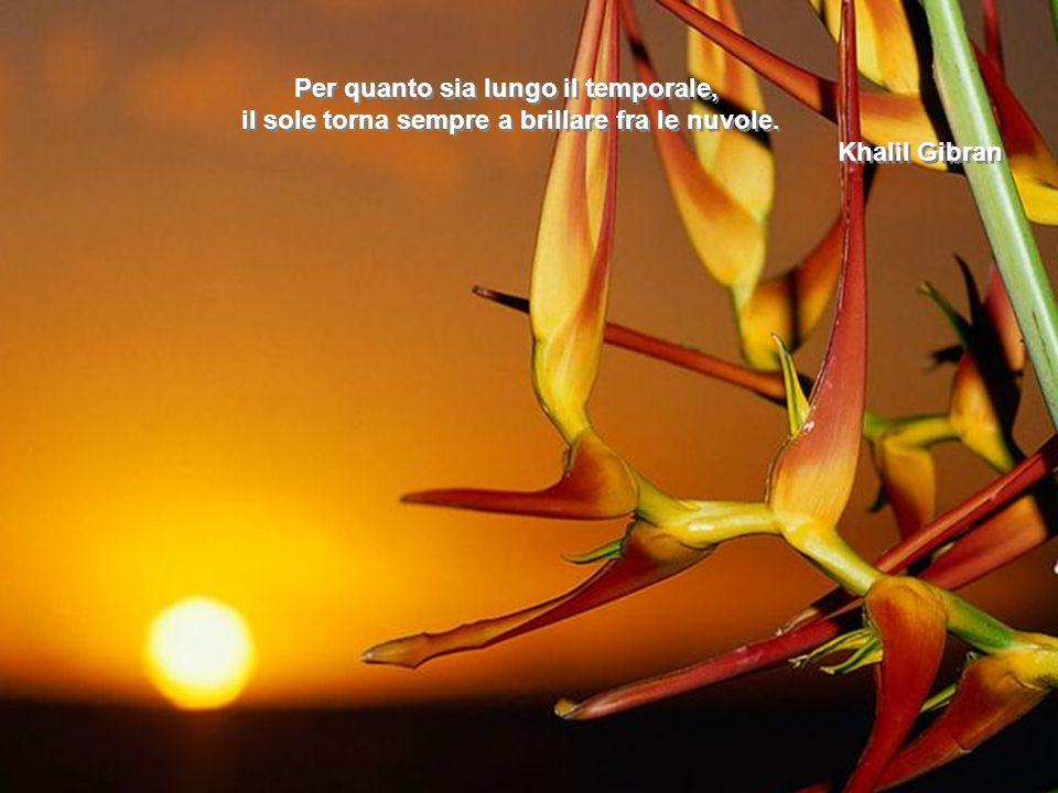 La speranza è un albero in fiore che si dondola dolcemente al soffio delle illusioni. Severo Catalina La speranza è un albero in fiore che si dondola