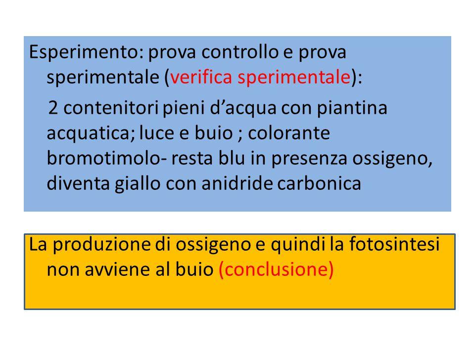 Esperimento: prova controllo e prova sperimentale (verifica sperimentale): 2 contenitori pieni d'acqua con piantina acquatica; luce e buio ; colorante