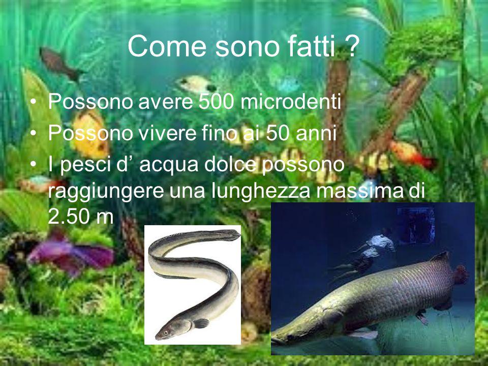 Come sono fatti ? Possono avere 500 microdenti Possono vivere fino ai 50 anni I pesci d' acqua dolce possono raggiungere una lunghezza massima di 2.50