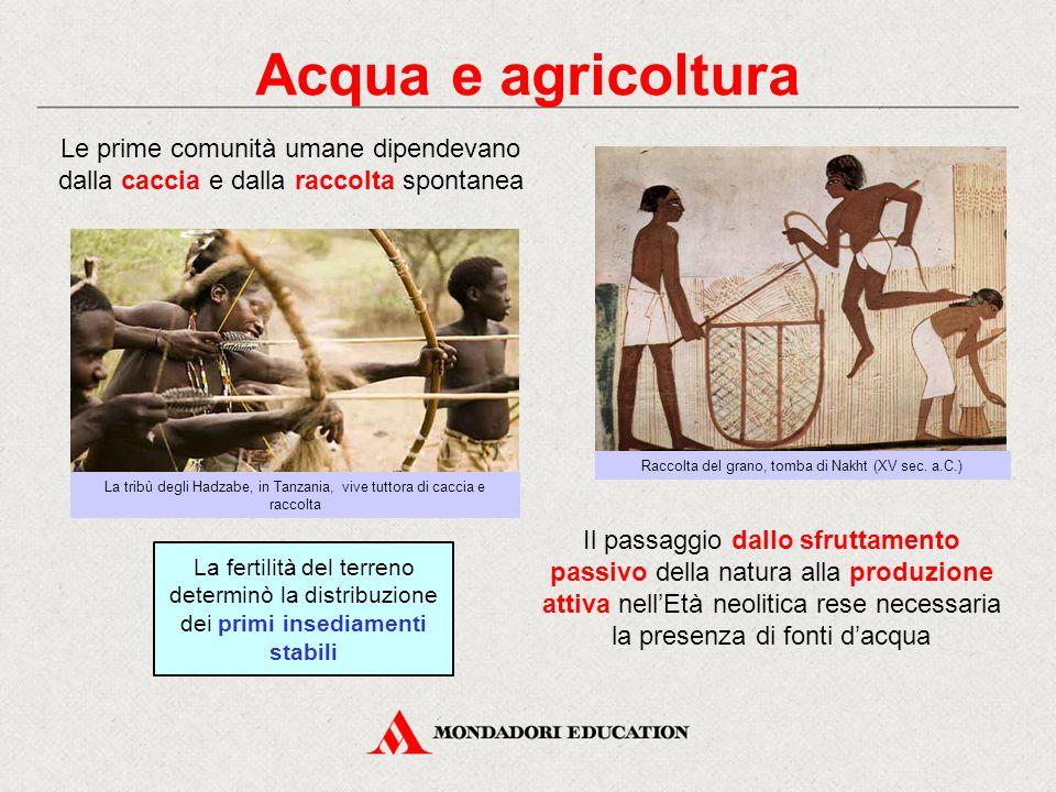 Acqua e agricoltura Le prime comunità umane dipendevano dalla caccia e dalla raccolta spontanea Raccolta del grano, tomba di Nakht (XV sec.