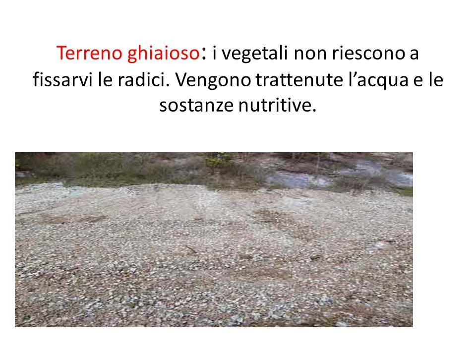 Terreno ghiaioso : i vegetali non riescono a fissarvi le radici.
