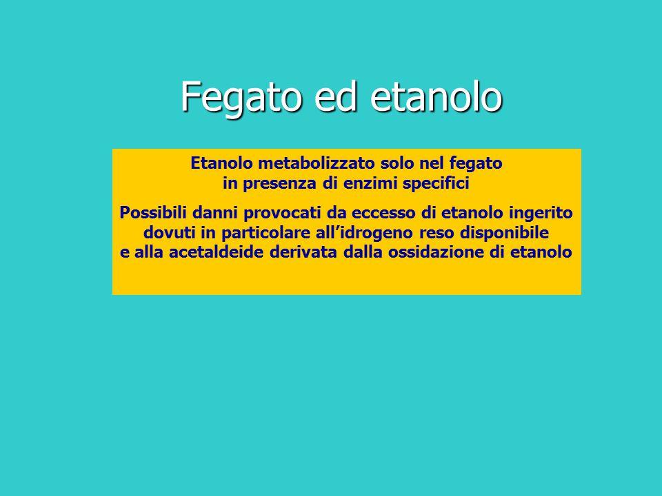 Fegato ed etanolo Etanolo metabolizzato solo nel fegato in presenza di enzimi specifici Possibili danni provocati da eccesso di etanolo ingerito dovut