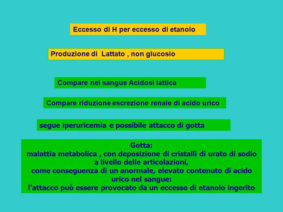 Eccesso di H per eccesso di etanolo Produzione di Lattato, non glucosio Compare nel sangue Acidosi lattica Compare riduzione escrezione renale di acid