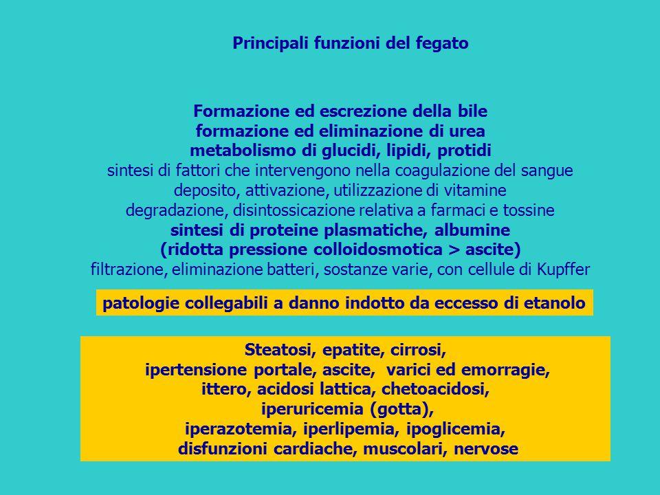 Principali funzioni del fegato Formazione ed escrezione della bile formazione ed eliminazione di urea metabolismo di glucidi, lipidi, protidi sintesi