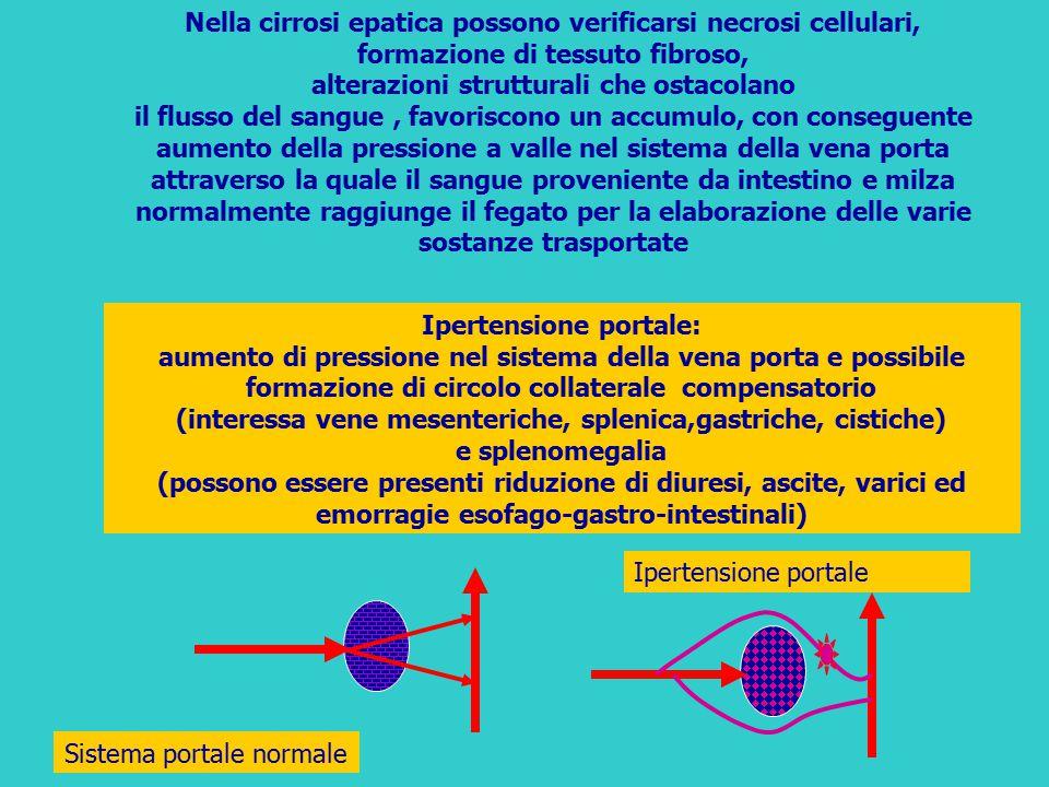 Ipertensione portale: aumento di pressione nel sistema della vena porta e possibile formazione di circolo collaterale compensatorio (interessa vene me