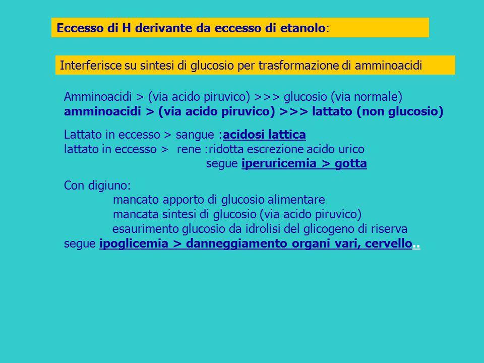 Eccesso di H derivante da eccesso di etanolo: Interferisce su sintesi di glucosio per trasformazione di amminoacidi Amminoacidi > (via acido piruvico)