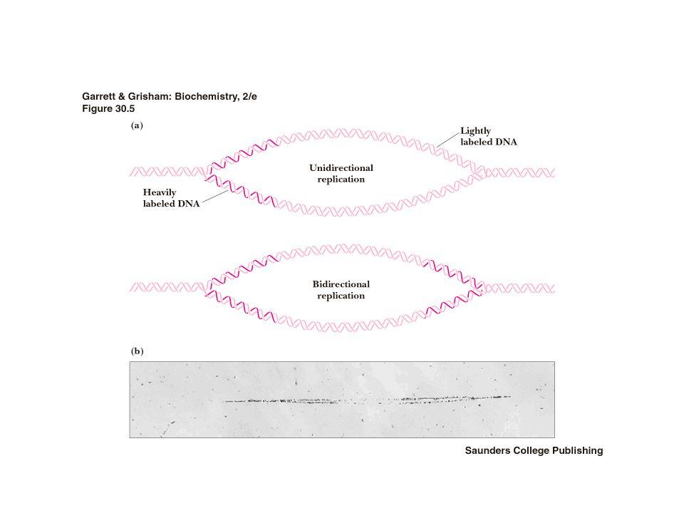La deficienza in FOLATO Puo' idurre mutazioni e Aumenta il rischio di tumore La carenza di Folato provoca uno sbilanciamento tra Uracile e Timina poiche' differiscono per la presenza di un gruppo metilico in quest'ultima.
