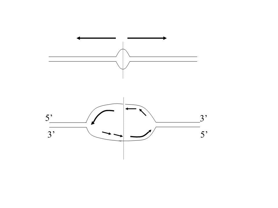 POLIMORFISMO GENICO e Richiesta di Folato Gene che codifica per la 5,10 metilentetraidrofolato reduttasi C T L'enzima risultante e' meno attivo e piu' instabile 12% sono T/T 50% T/C 38% C/C In questi individui la concentrazione plasmatica di folato e' piu' bassa