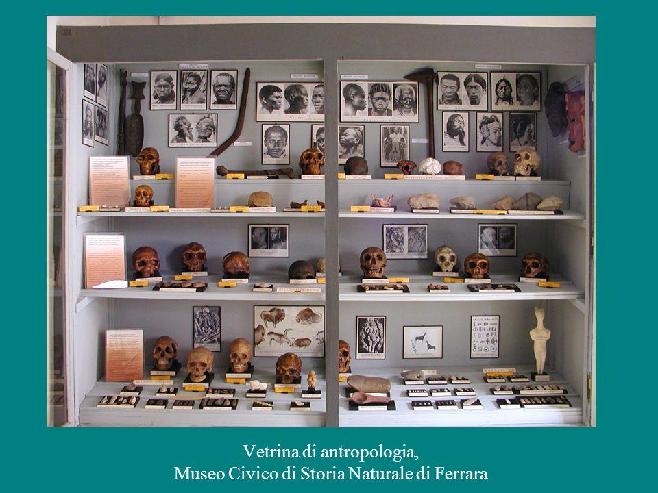 Vetrina di antropologia, Museo Civico di Storia Naturale di Ferrara