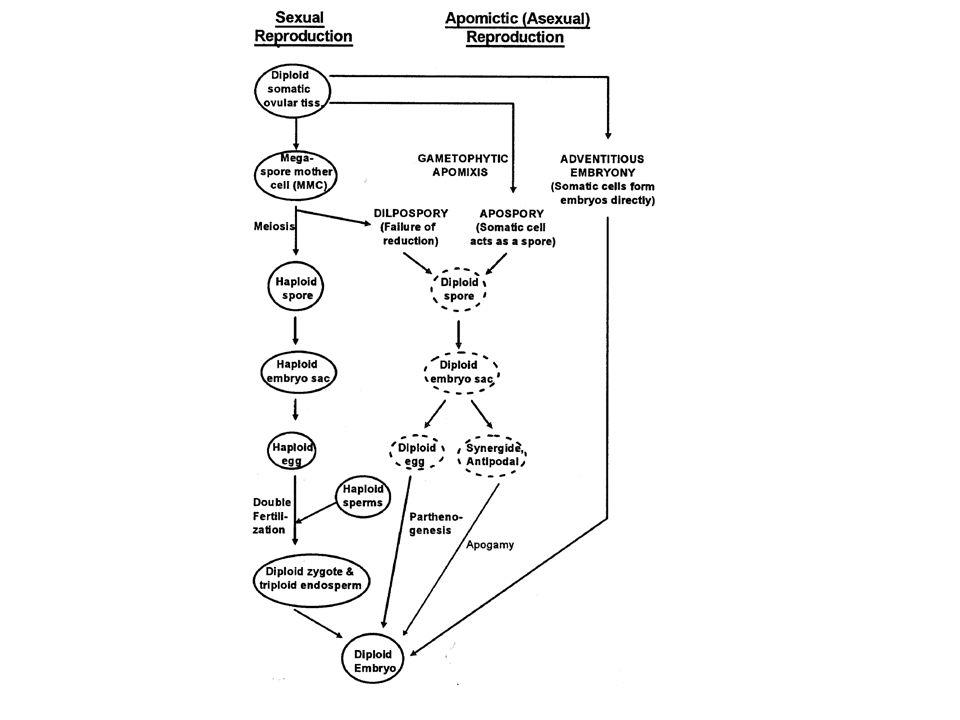 xilema floema endoderma corteccia