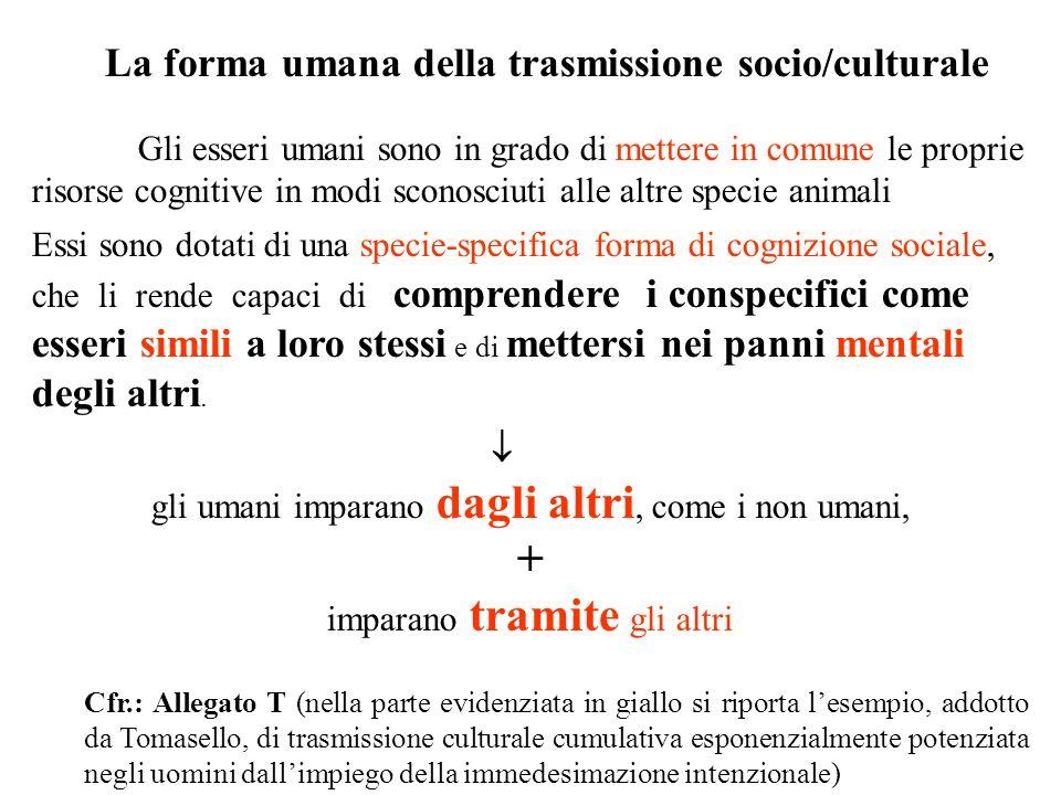 La forma umana della trasmissione socio/culturale Gli esseri umani sono in grado di mettere in comune le proprie risorse cognitive in modi sconosciuti