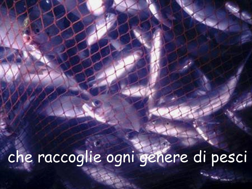 che raccoglie ogni genere di pesci.