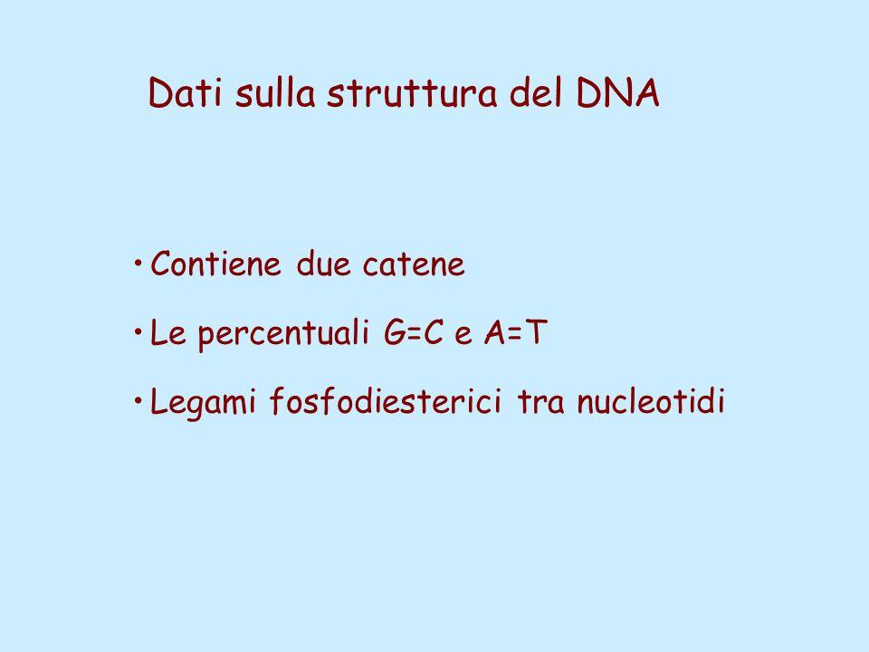 Dati sulla struttura del DNA Contiene due catene Le percentuali G=C e A=T Legami fosfodiesterici tra nucleotidi
