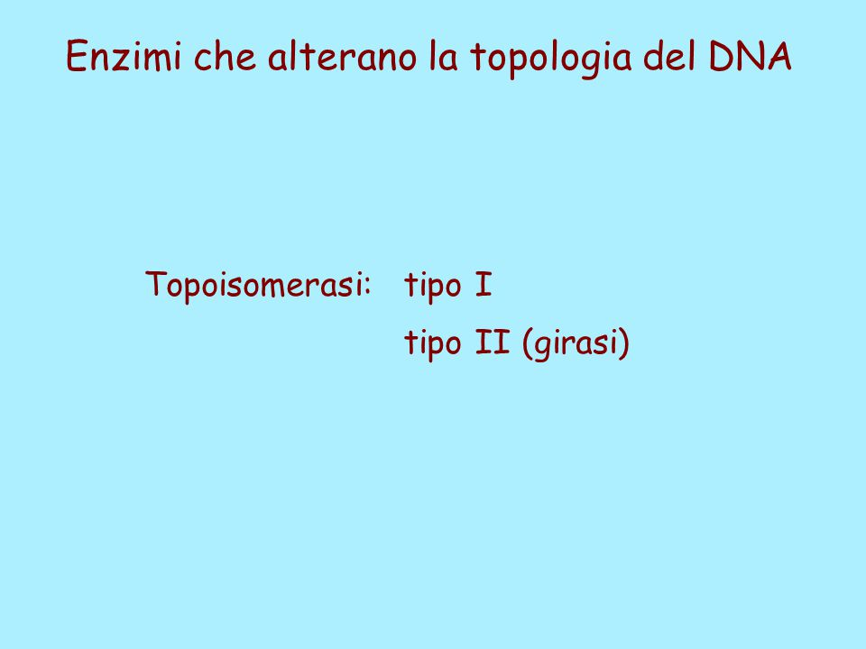 Enzimi che alterano la topologia del DNA Topoisomerasi: tipo I tipo II (girasi)