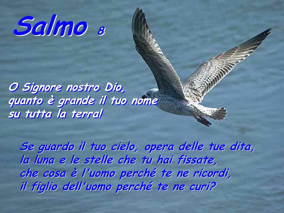 Salmo 8 O Signore nostro Dio, quanto è grande il tuo nome su tutta la terra.