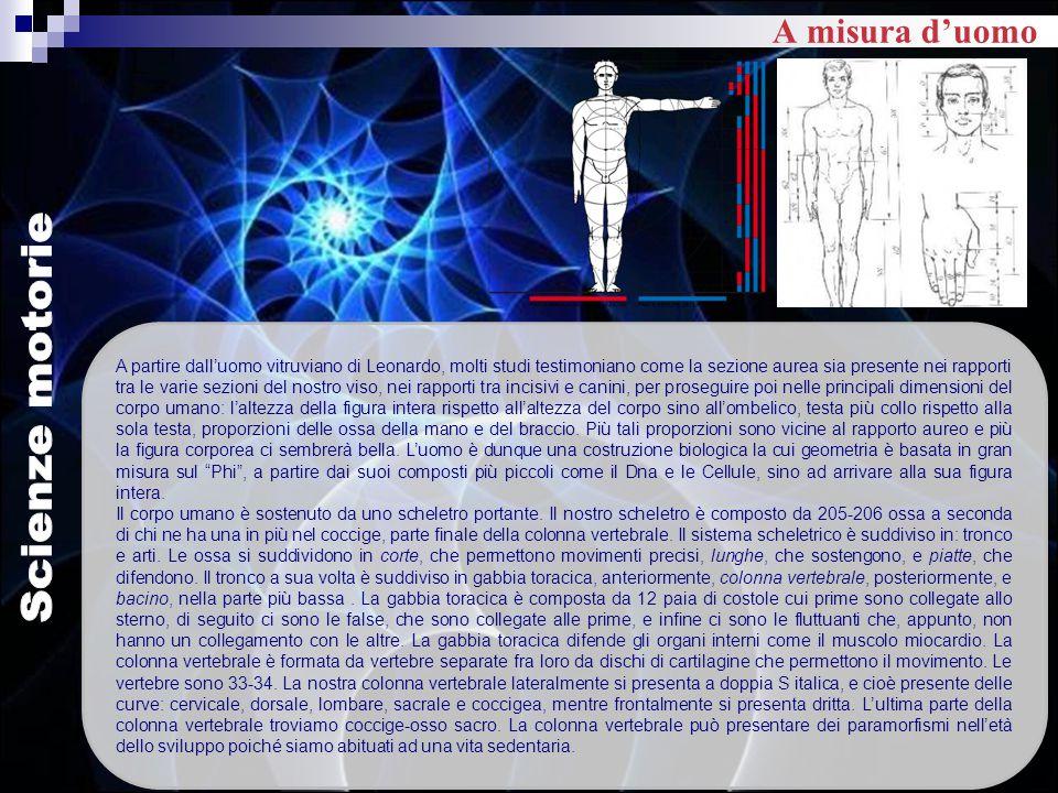 A partire dall'uomo vitruviano di Leonardo, molti studi testimoniano come la sezione aurea sia presente nei rapporti tra le varie sezioni del nostro v