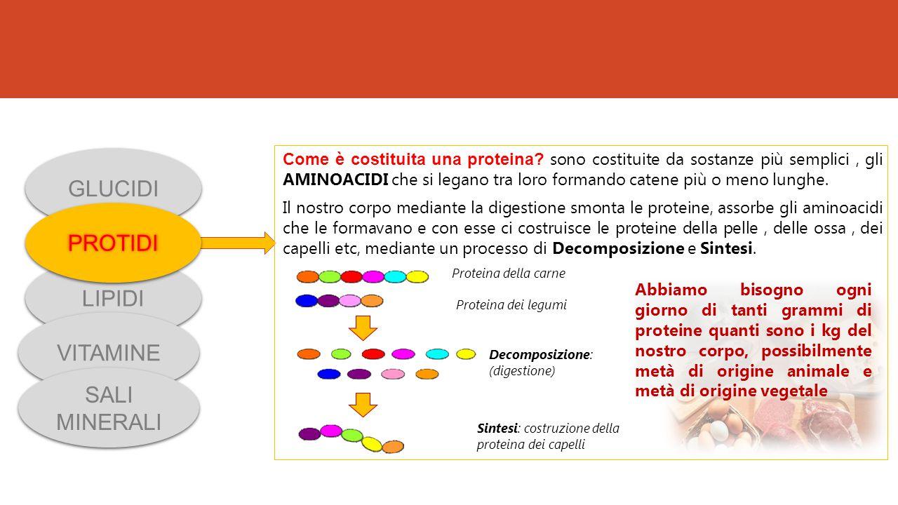 Come è costituita una proteina? sono costituite da sostanze più semplici, gli AMINOACIDI che si legano tra loro formando catene più o meno lunghe. Il