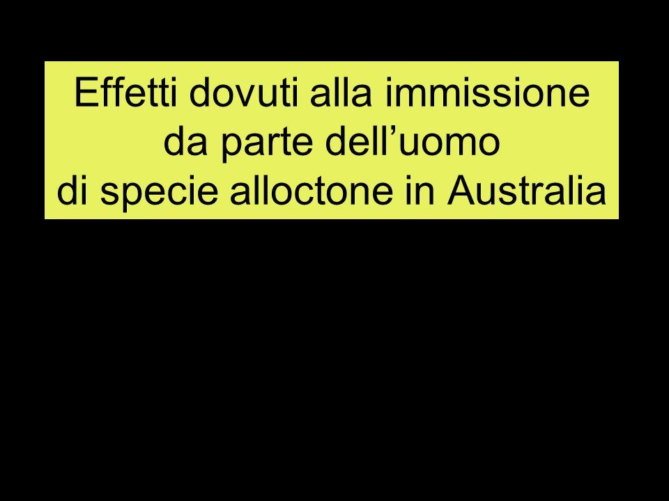 Introduzione del coniglio, liberazione conigli selvatici, proliferazione (mancanza di predatori), gravi danni ai vegetali Introduzione della volpe (predatore) : caccia più marsupiali che conigli, volatili Diminuendo i volatili aumentano insetti nocivi per foreste, eucalipti Per salvare gli eucalipti si cacciano i koala che se ne nutrono :rischio estinzione….