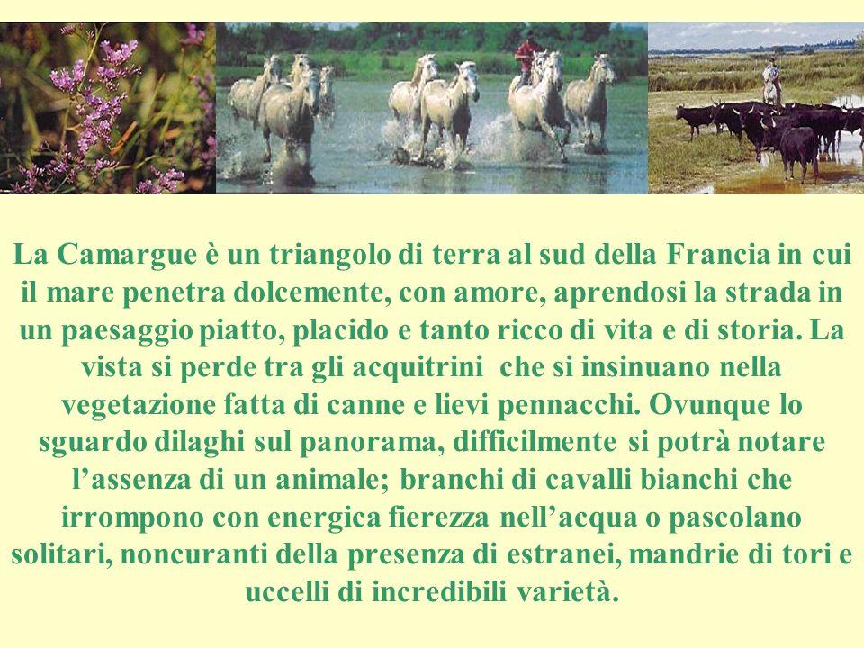 LA CAMARGUE La terra dove gli uomini dividono la loro vita con i cavalli, i tori, gli uccelli, il cielo e l'acqua.