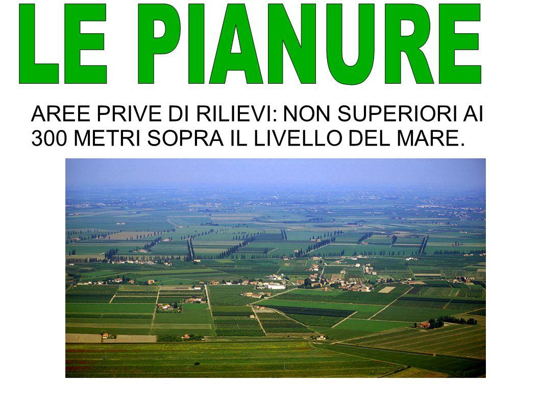 AREE PRIVE DI RILIEVI: NON SUPERIORI AI 300 METRI SOPRA IL LIVELLO DEL MARE.