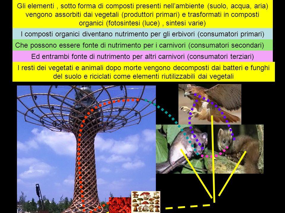 Gli elementi, sotto forma di composti presenti nell'ambiente (suolo, acqua, aria) vengono assorbiti dai vegetali (produttori primari) e trasformati in