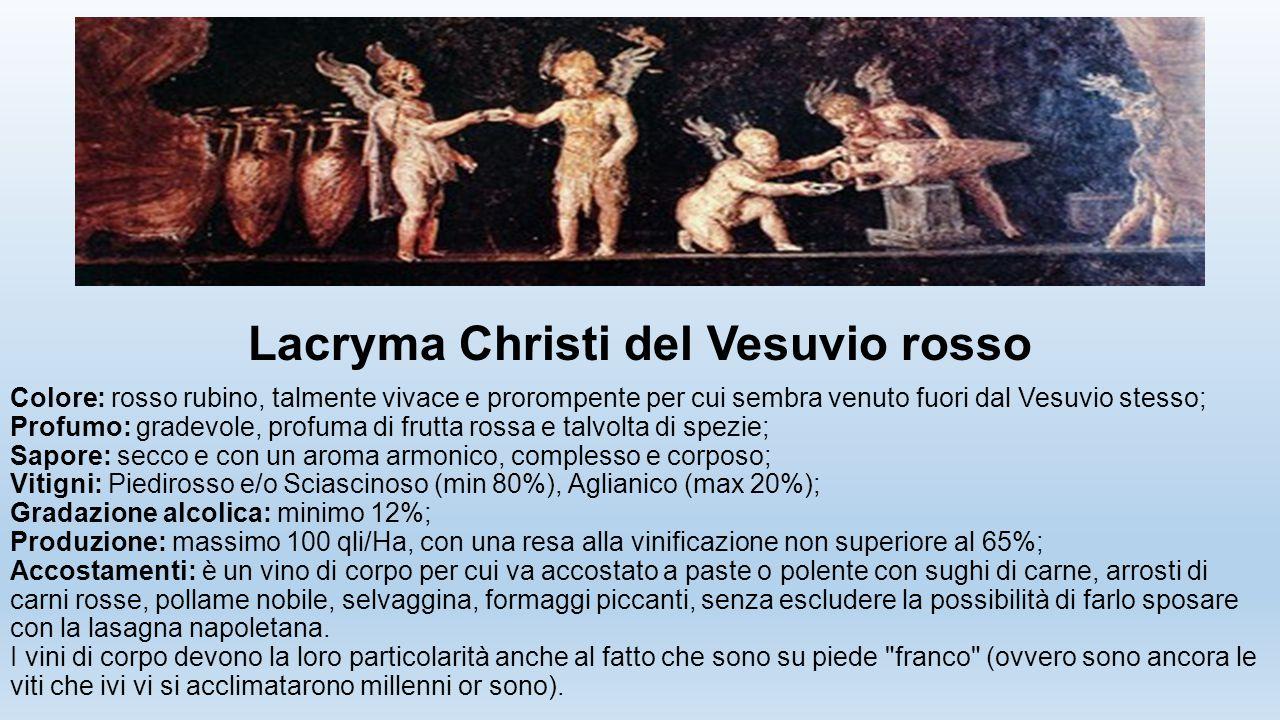 Lacryma Christi del Vesuvio rosso Colore: rosso rubino, talmente vivace e prorompente per cui sembra venuto fuori dal Vesuvio stesso; Profumo: gradevo
