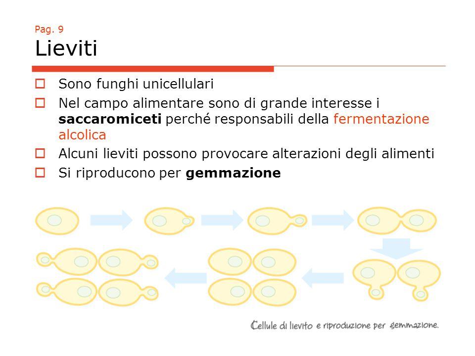 Pag. 9 Lieviti  Sono funghi unicellulari  Nel campo alimentare sono di grande interesse i saccaromiceti perché responsabili della fermentazione alco