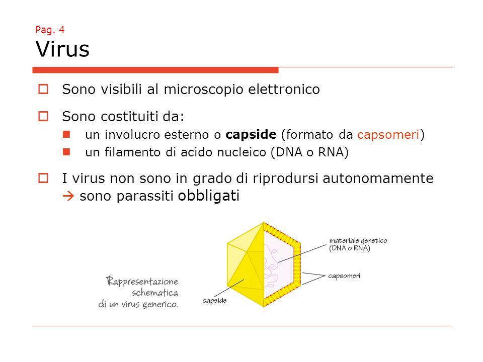 Pag. 4 Virus  Sono visibili al microscopio elettronico  Sono costituiti da: un involucro esterno o capside (formato da capsomeri) un filamento di ac