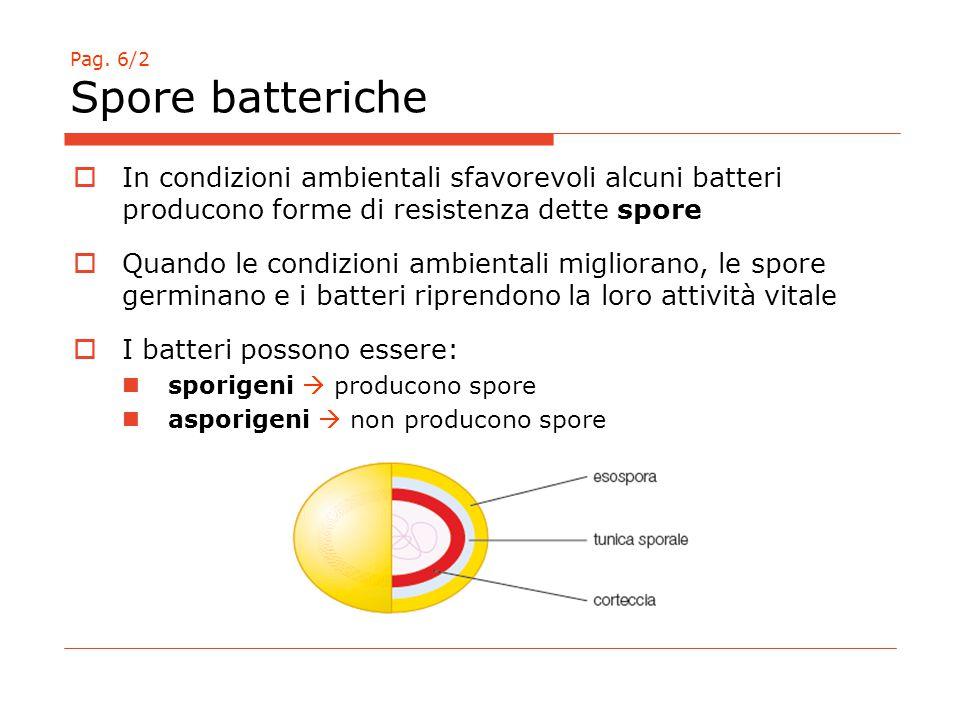 Pag. 6/2 Spore batteriche  In condizioni ambientali sfavorevoli alcuni batteri producono forme di resistenza dette spore  Quando le condizioni ambie